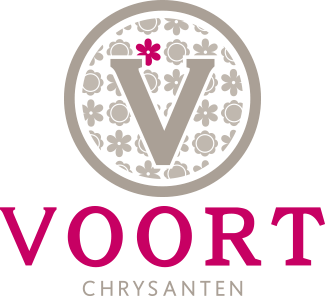Company Van der Voort - Year round Chrysanthemum cultivation